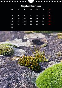 Die fantastische Welt der Moose (Wandkalender 2019 DIN A4 hoch) - Produktdetailbild 9