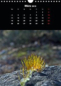 Die fantastische Welt der Moose (Wandkalender 2019 DIN A4 hoch) - Produktdetailbild 3