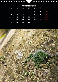 Die fantastische Welt der Moose (Wandkalender 2019 DIN A4 hoch) - Produktdetailbild 2