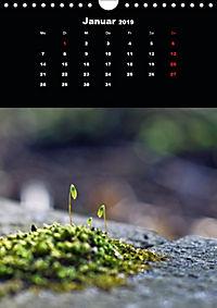 Die fantastische Welt der Moose (Wandkalender 2019 DIN A4 hoch) - Produktdetailbild 1