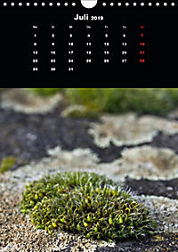 Die fantastische Welt der Moose (Wandkalender 2019 DIN A4 hoch) - Produktdetailbild 7