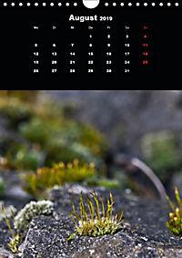 Die fantastische Welt der Moose (Wandkalender 2019 DIN A4 hoch) - Produktdetailbild 8