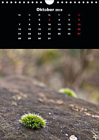 Die fantastische Welt der Moose (Wandkalender 2019 DIN A4 hoch) - Produktdetailbild 10