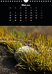 Die fantastische Welt der Moose (Wandkalender 2019 DIN A4 hoch) - Produktdetailbild 5