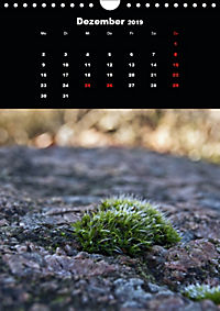 Die fantastische Welt der Moose (Wandkalender 2019 DIN A4 hoch) - Produktdetailbild 12