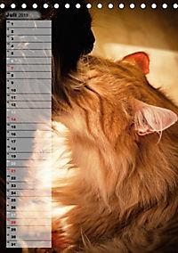 DIE GEFÜHLSWELT (Tischkalender 2019 DIN A5 hoch) - Produktdetailbild 7