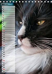 DIE GEFÜHLSWELT (Tischkalender 2019 DIN A5 hoch) - Produktdetailbild 5