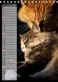 DIE GEFÜHLSWELT (Tischkalender 2019 DIN A5 hoch) - Produktdetailbild 10