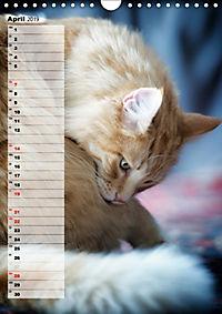 DIE GEFÜHLSWELT (Wandkalender 2019 DIN A4 hoch) - Produktdetailbild 4