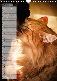 DIE GEFÜHLSWELT (Wandkalender 2019 DIN A4 hoch) - Produktdetailbild 7