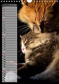 DIE GEFÜHLSWELT (Wandkalender 2019 DIN A4 hoch) - Produktdetailbild 10