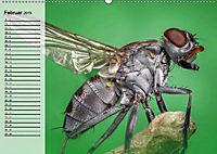 Die geheimnisvolle Welt der Insekten (Wandkalender 2019 DIN A2 quer) - Produktdetailbild 2