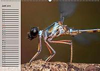 Die geheimnisvolle Welt der Insekten (Wandkalender 2019 DIN A2 quer) - Produktdetailbild 6