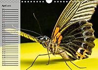 Die geheimnisvolle Welt der Insekten (Wandkalender 2019 DIN A4 quer) - Produktdetailbild 4