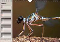 Die geheimnisvolle Welt der Insekten (Wandkalender 2019 DIN A4 quer) - Produktdetailbild 6