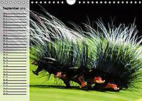 Die geheimnisvolle Welt der Insekten (Wandkalender 2019 DIN A4 quer) - Produktdetailbild 9
