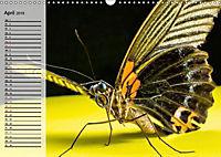 Die geheimnisvolle Welt der Insekten (Wandkalender 2019 DIN A3 quer) - Produktdetailbild 4