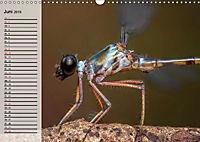 Die geheimnisvolle Welt der Insekten (Wandkalender 2019 DIN A3 quer) - Produktdetailbild 6
