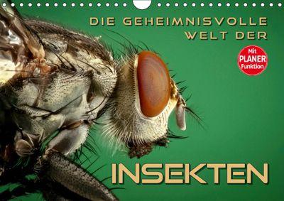Die geheimnisvolle Welt der Insekten (Wandkalender 2019 DIN A4 quer), Renate Bleicher