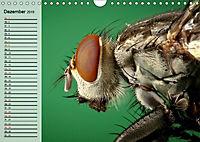 Die geheimnisvolle Welt der Insekten (Wandkalender 2019 DIN A4 quer) - Produktdetailbild 12