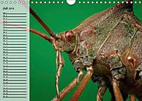 Die geheimnisvolle Welt der Insekten (Wandkalender 2019 DIN A4 quer) - Produktdetailbild 7