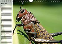 Die geheimnisvolle Welt der Insekten (Wandkalender 2019 DIN A4 quer) - Produktdetailbild 3