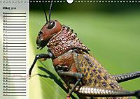 Die geheimnisvolle Welt der Insekten (Wandkalender 2019 DIN A3 quer) - Produktdetailbild 3