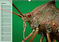 Die geheimnisvolle Welt der Insekten (Wandkalender 2019 DIN A3 quer) - Produktdetailbild 7