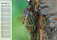 Die geheimnisvolle Welt der Insekten (Wandkalender 2019 DIN A3 quer) - Produktdetailbild 11