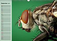 Die geheimnisvolle Welt der Insekten (Wandkalender 2019 DIN A3 quer) - Produktdetailbild 12