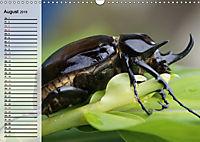 Die geheimnisvolle Welt der Insekten (Wandkalender 2019 DIN A3 quer) - Produktdetailbild 8