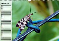 Die geheimnisvolle Welt der Insekten (Wandkalender 2019 DIN A3 quer) - Produktdetailbild 10