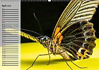 Die geheimnisvolle Welt der Insekten (Wandkalender 2019 DIN A2 quer) - Produktdetailbild 4