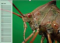 Die geheimnisvolle Welt der Insekten (Wandkalender 2019 DIN A2 quer) - Produktdetailbild 7