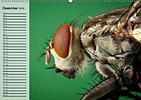 Die geheimnisvolle Welt der Insekten (Wandkalender 2019 DIN A2 quer) - Produktdetailbild 12