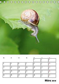 Die geheimnisvolle Welt der Schnecken (Tischkalender 2019 DIN A5 hoch) - Produktdetailbild 3