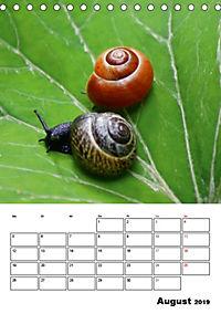 Die geheimnisvolle Welt der Schnecken (Tischkalender 2019 DIN A5 hoch) - Produktdetailbild 8