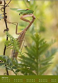 Die Gottesanbeterin. Räuber der Insektenwelt. (Wandkalender 2019 DIN A2 hoch) - Produktdetailbild 2