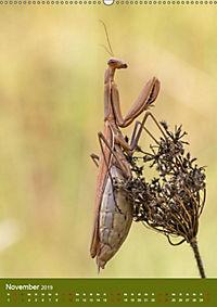 Die Gottesanbeterin. Räuber der Insektenwelt. (Wandkalender 2019 DIN A2 hoch) - Produktdetailbild 7