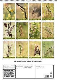Die Gottesanbeterin. Räuber der Insektenwelt. (Wandkalender 2019 DIN A2 hoch) - Produktdetailbild 13