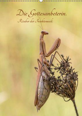 Die Gottesanbeterin. Räuber der Insektenwelt. (Wandkalender 2019 DIN A2 hoch), juehust