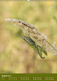 Die Gottesanbeterin. Räuber der Insektenwelt. (Wandkalender 2019 DIN A2 hoch) - Produktdetailbild 8