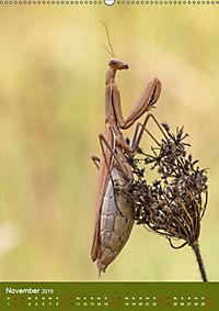 Die Gottesanbeterin. Räuber der Insektenwelt. (Wandkalender 2019 DIN A2 hoch) - Produktdetailbild 11
