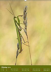 Die Gottesanbeterin. Räuber der Insektenwelt. (Wandkalender 2019 DIN A2 hoch) - Produktdetailbild 10
