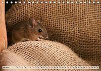 Die Hausmaus Anneliese (Tischkalender 2019 DIN A5 quer) - Produktdetailbild 7