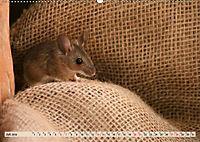Die Hausmaus Anneliese (Wandkalender 2019 DIN A2 quer) - Produktdetailbild 7