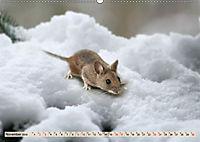 Die Hausmaus Anneliese (Wandkalender 2019 DIN A2 quer) - Produktdetailbild 11