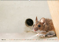 Die Hausmaus Anneliese (Wandkalender 2019 DIN A2 quer) - Produktdetailbild 3