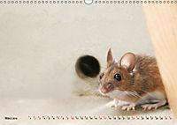 Die Hausmaus Anneliese (Wandkalender 2019 DIN A3 quer) - Produktdetailbild 3