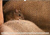 Die Hausmaus Anneliese (Wandkalender 2019 DIN A3 quer) - Produktdetailbild 7